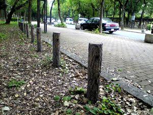 meijyokoen_20100766