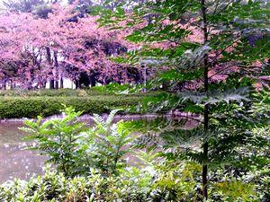 meijyokoen_20100777