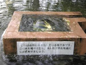 shimizuwakuwakusui0656