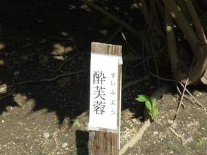 tokugawaen03915