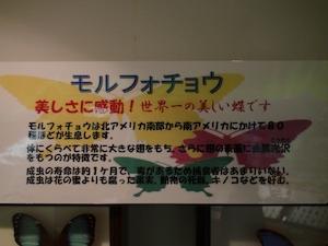 todagawaryokuchi04214