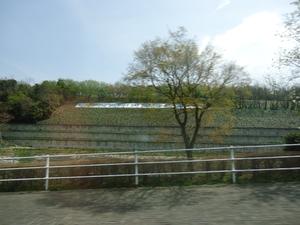 okazakipark03155