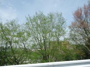 okazakipark03165
