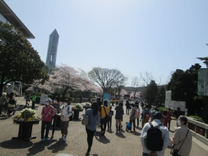 higashiyama_sakura_0649