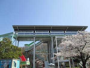 higashiyama_sakura_0659