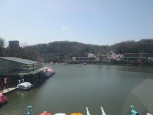 higashiyama_sakura_0746