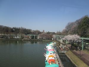 higashiyama_sakura_0748