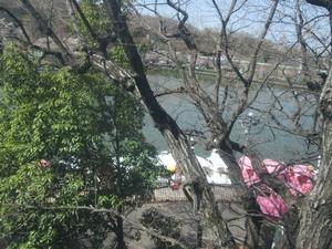 higashiyama_sakura_0752