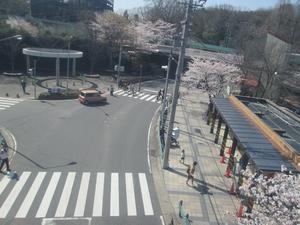 higashiyama_sakura_0762