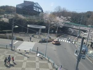 higashiyama_sakura_0763