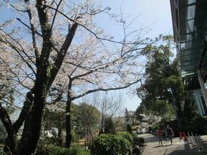 higashiyama_sakura_0768