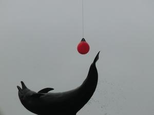 dolphin3897
