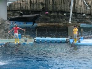 dolphin4884