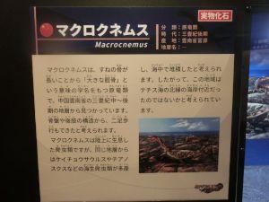 fukuiprefecturaldinosaurmuseum3141