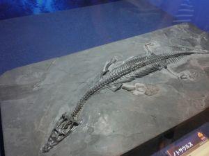fukuiprefecturaldinosaurmuseum3144