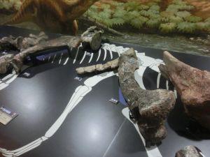 fukuiprefecturaldinosaurmuseum3145