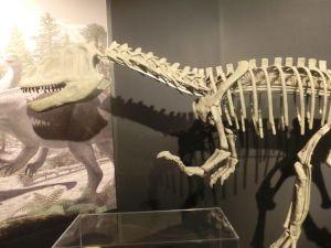 fukuiprefecturaldinosaurmuseum3159