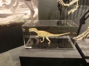fukuiprefecturaldinosaurmuseum3160
