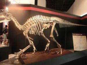 fukuiprefecturaldinosaurmuseum3171