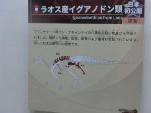 fukuiprefecturaldinosaurmuseum3172