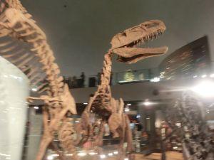 fukuiprefecturaldinosaurmuseum3263