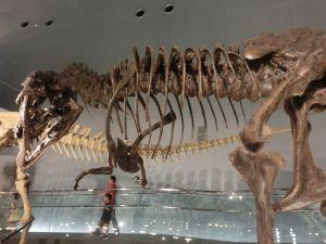 fukuiprefecturaldinosaurmuseum3270