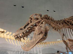 fukuiprefecturaldinosaurmuseum3276