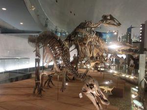 fukuiprefecturaldinosaurmuseum3287