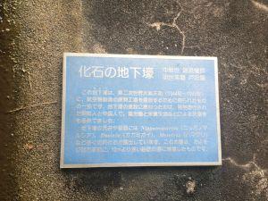 kaseki 11.02.20