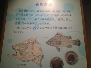 kaseki 11.16.47