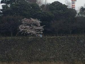 nagoya_sakura 15.40.14