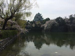 nagoya_sakura 11.54.53