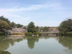 nagoya_sakura 11.59.09