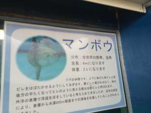 echizen-aquarium 10.41.44