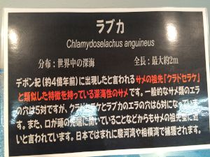 echizen-aquarium 10.50.58