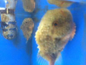 echizen-aquarium 11.37.24