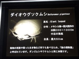 echizen-aquarium 11.37.29