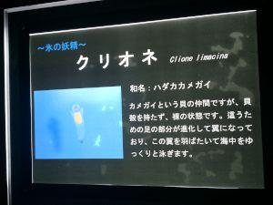 echizen-aquarium 11.37.55