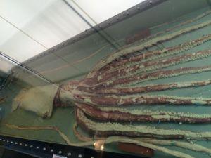 echizen-aquarium 11.39.35