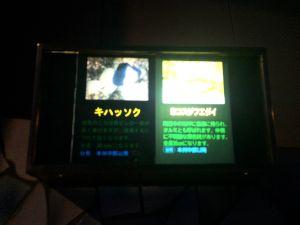 echizen-aquarium 11.40.37