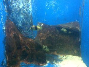 echizen-aquarium 11.40.39