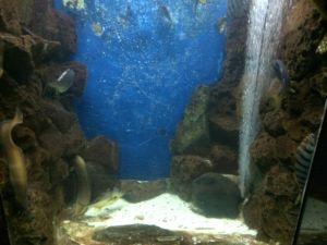echizen-aquarium 11.41.40