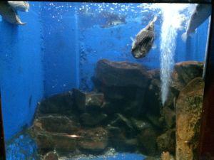 echizen-aquarium 11.42.26