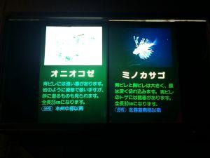 echizen-aquarium 11.42.38