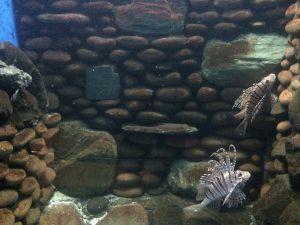 echizen-aquarium 11.42.41-2