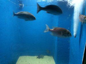 echizen-aquarium 11.42.48