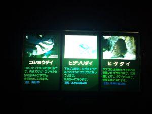 echizen-aquarium 11.42.56