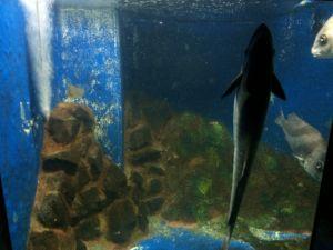 echizen-aquarium 11.42.58