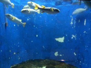 echizen-aquarium 11.43.51