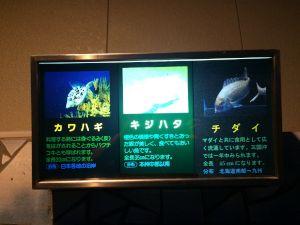 echizen-aquarium 11.43.55